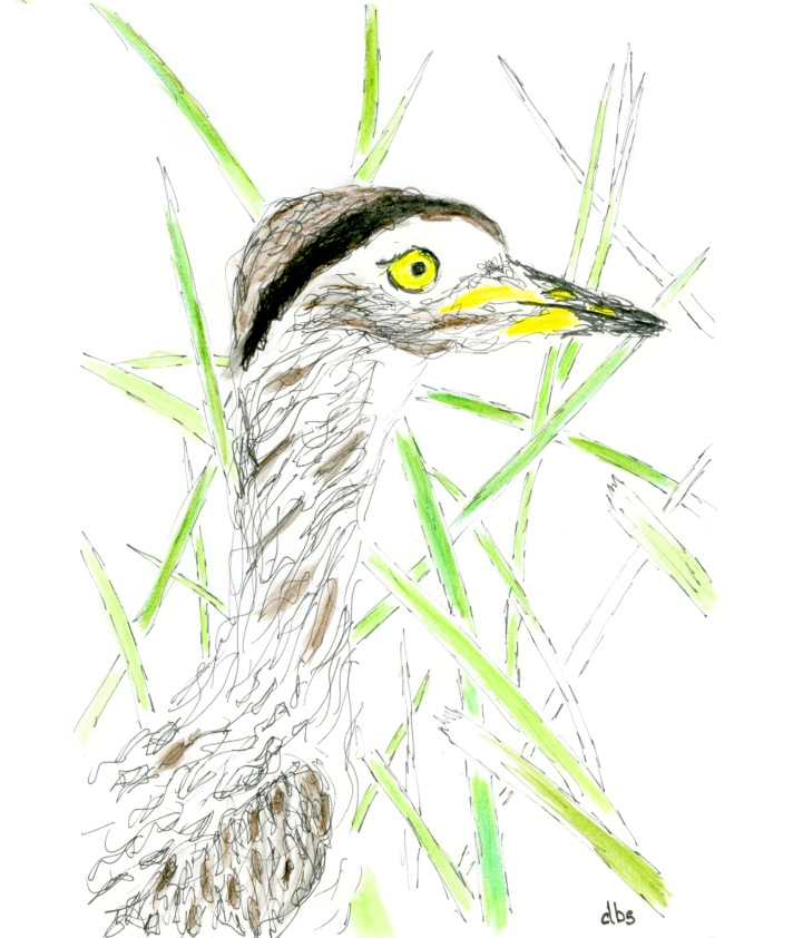 CR-Thick-Knee002