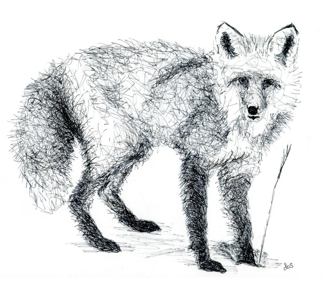 Fox003-reduced