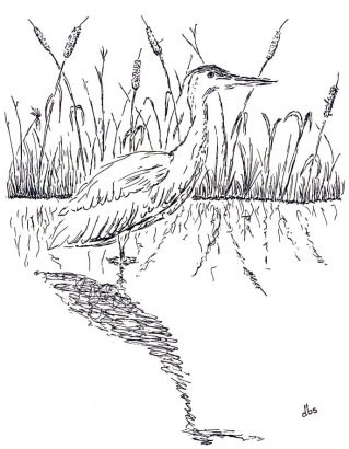 12-Great Blue Heron-reduced