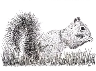 17-Squirrel-reduced