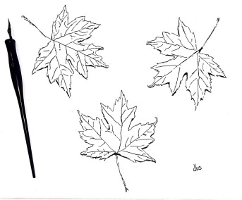 18-Maple Leaves-reduced