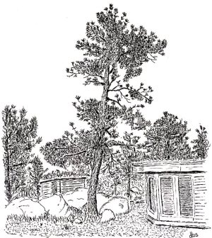 29-Saidel Tree-reduced